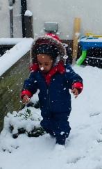 Snow-Pygmy!